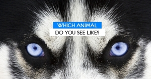 Which Animal Do You See Like?