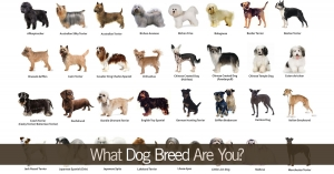 What Dog Breed Are You?